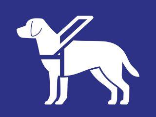 Perros guía, un ejemplo de prevención y seguridad
