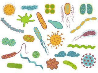 ¿Sabías que existe una clasificación legal de virus y bacterias?
