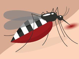 Mosquitos, avispas y arácnidos ¿Cómo evitar estas molestas picaduras?